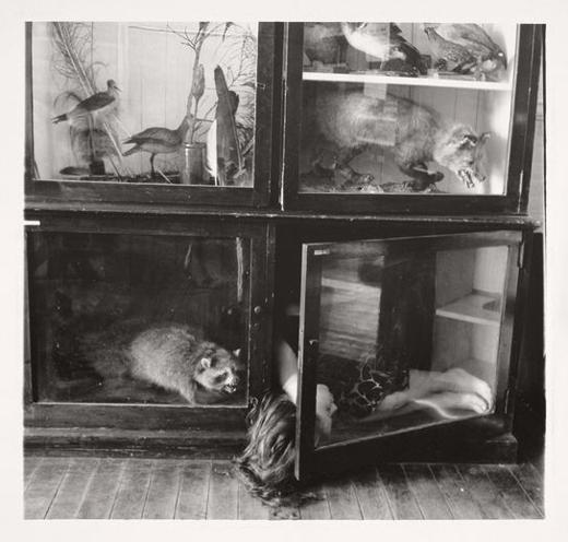 Untitled RISD Nature Lab, 1979